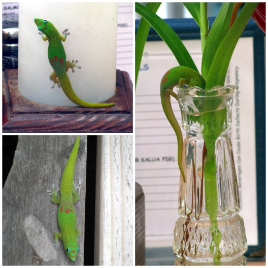 part 1 - geckos