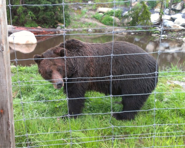 part 2 - grizzly