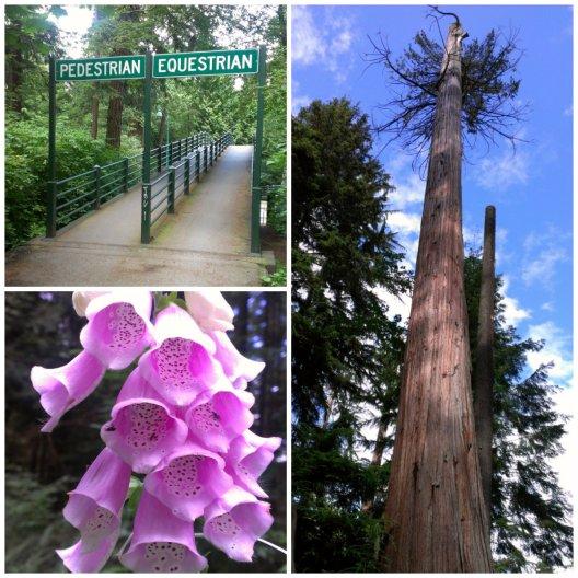 part 3 - stanley park