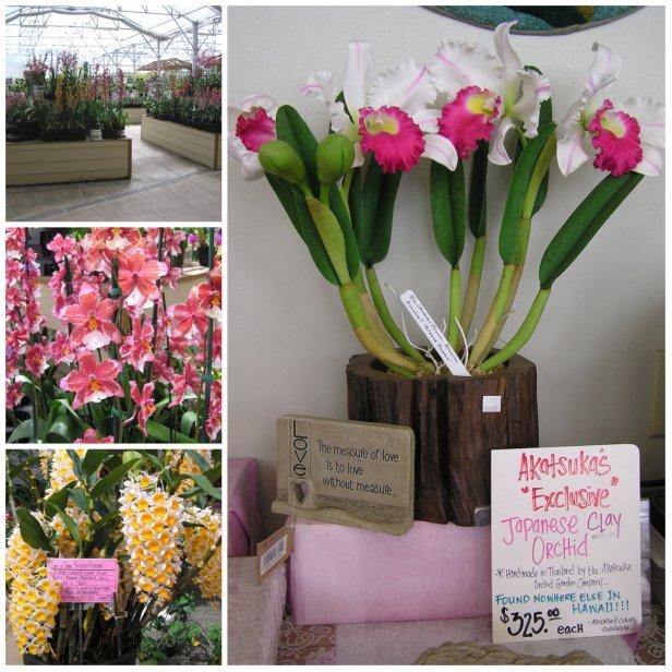 part 2 - orchids