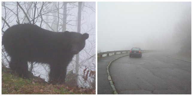 Bear on the left, treacherously foggy road on the right