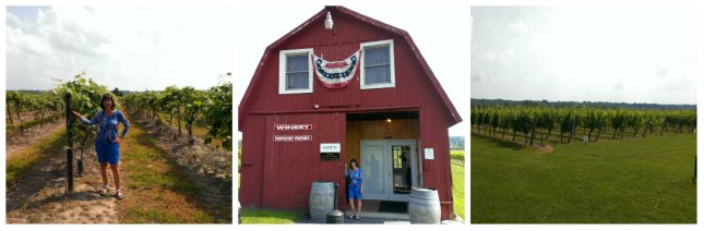 Niagara Vineyards